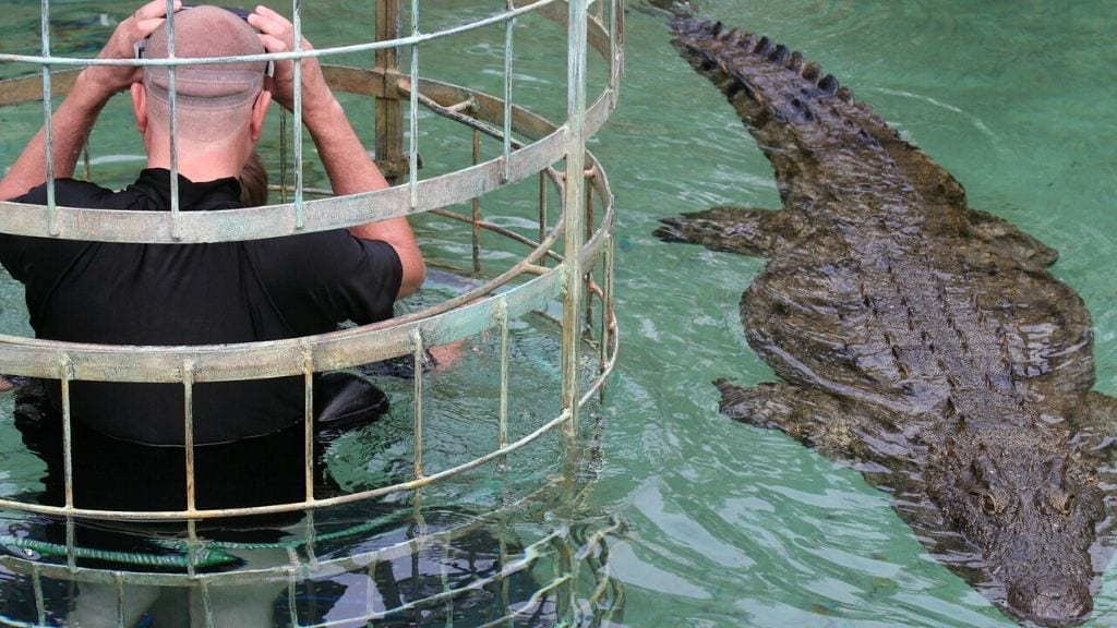 Kadealo, Close Animal Encounters, Crocodile Cage Diving, South Africa