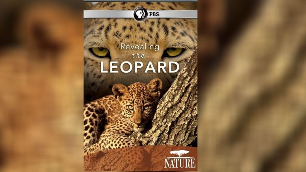 Kadealo, Wildlife Documentaries, African Documentary, Revealing the Leopard