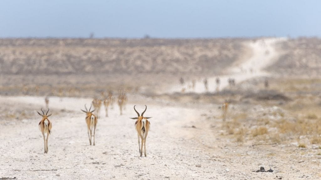 Kadealo, African National Park, Etosha National Park, Namibia