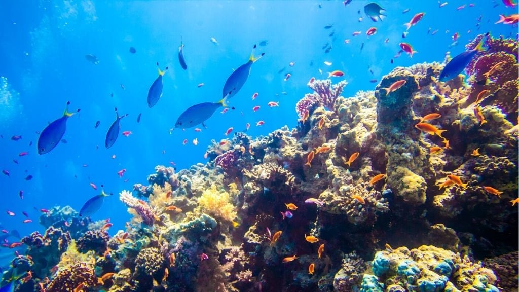 Kadealo, African Natural Wonders, Red Sea Reef, Egypt