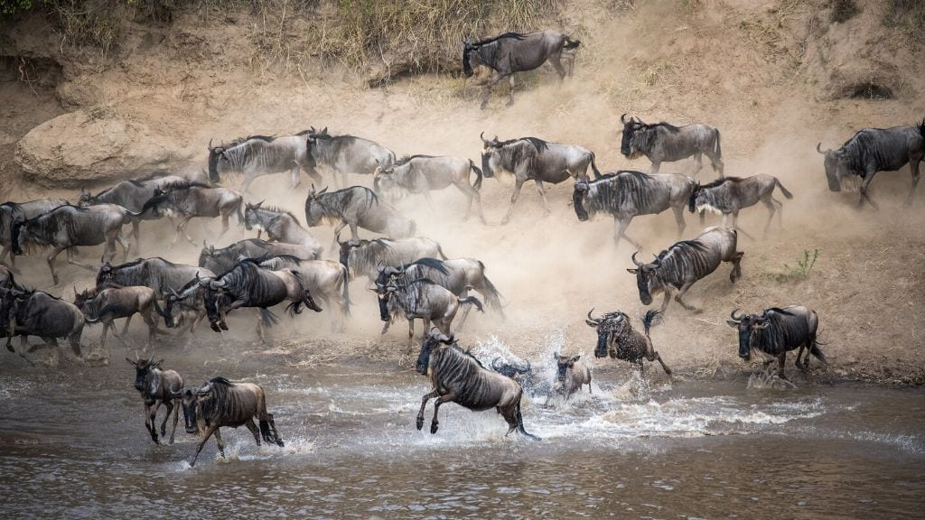 Kadealo, African Natural Wonders, The Great Migration, Tanzania
