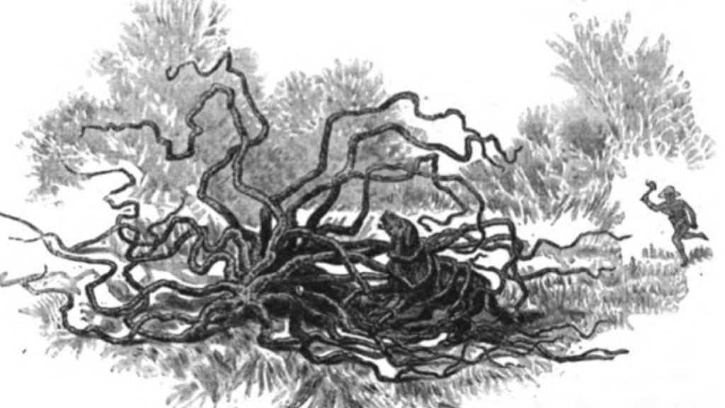 Kadealo, African Myths and Legends, The Man Eating Tree of Madagascar
